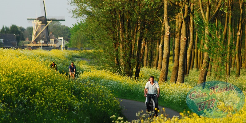 Thời tiết khí hậu Hà Lan - 4 mùa tươi đẹp, du lich phát triển quanh năm