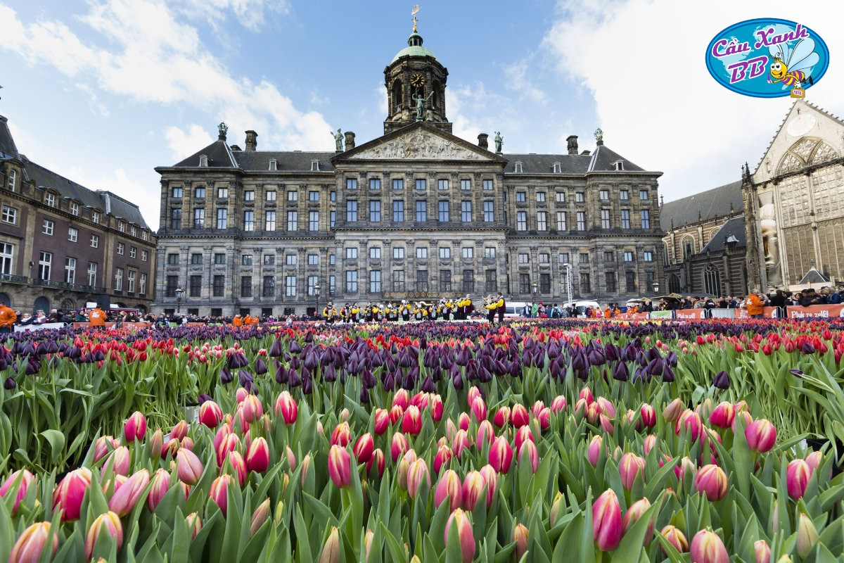 Visa du học Hà Lan và các thủ tục cần thiết