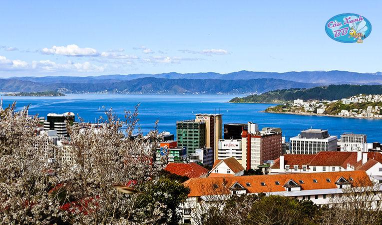 Chi phí du học New Zealand hết bao nhiêu tiền?